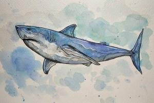 Des dessinateurs qui se mobilisent pour les requins