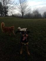 Max, Apollo & Emmy