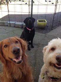 Duke, Maui & Lilly