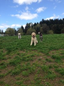 Zoie, Petey & Apollo