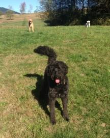 Benny, Riley and Mr Apollo