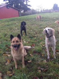 Murphy, Lilo, Rocky and Riley