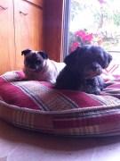 Ms Polly & Dash