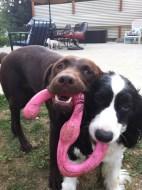 Otis & Ike