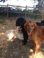 Duke, Benny & Maui