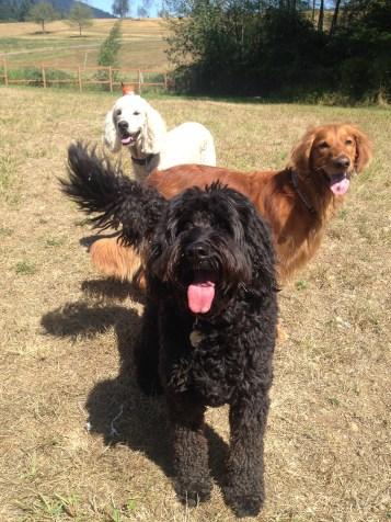 Benny, Duke & Lilo