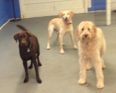 Shop Day Otis, Benny & Zoie