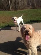 Ms Zoie & Bud Jr