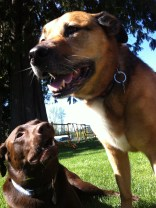 Otis & Magy