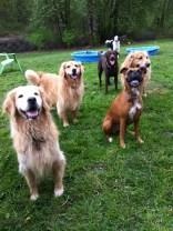 Mesa, Ginger, Ellie, Otis, Ziggy & Sunny