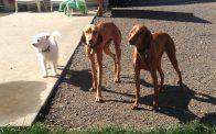 Ms Daisy, Riggins & Aria