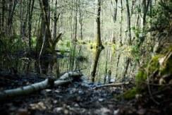 Balade en Forêt (2)