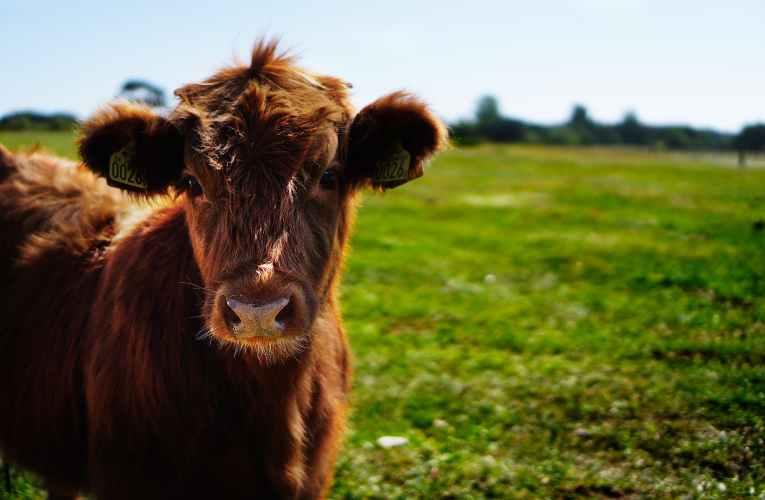 Crise du Coronavirus : un dispositif de cumul RSA / emploi saisonnier agricole activé en priorité
