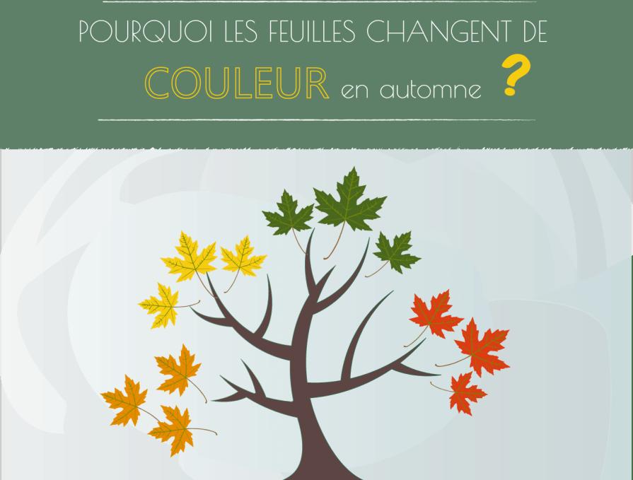 Pourquoi les feuilles changent de couleur