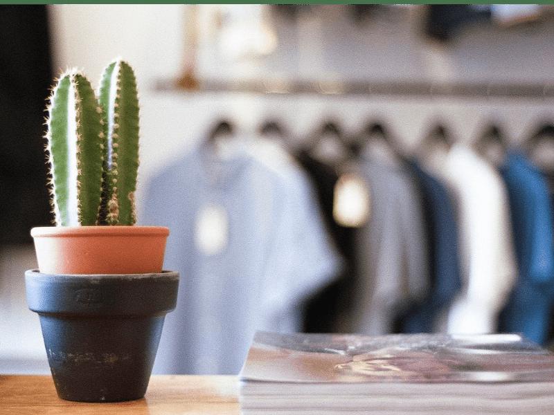 Visuel Cactus dans appartement