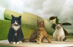 chats-bilbao