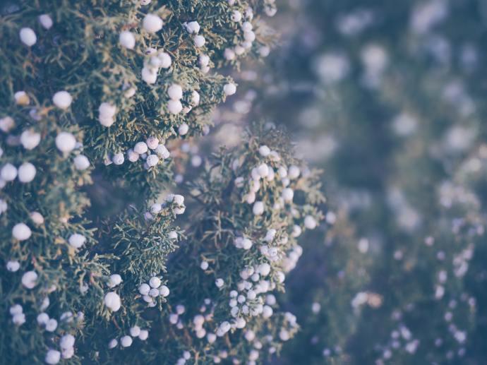 sposarsi in inverno le petit o - i colori