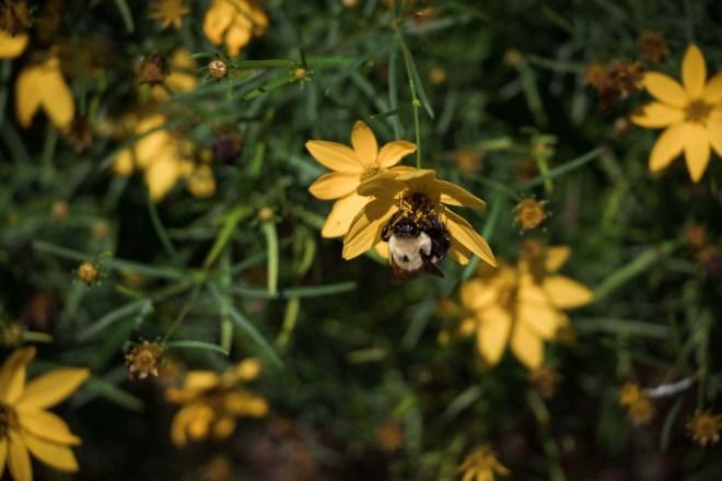 Memorial Garden, Concord, NC