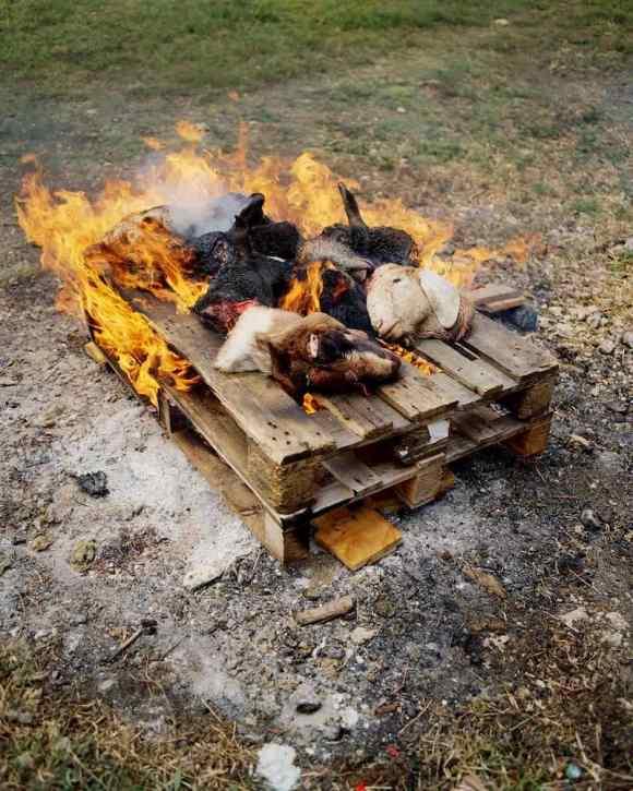 Des têtes de moutons brûlés en Guadeloupe photographiés par Gregory Halpern