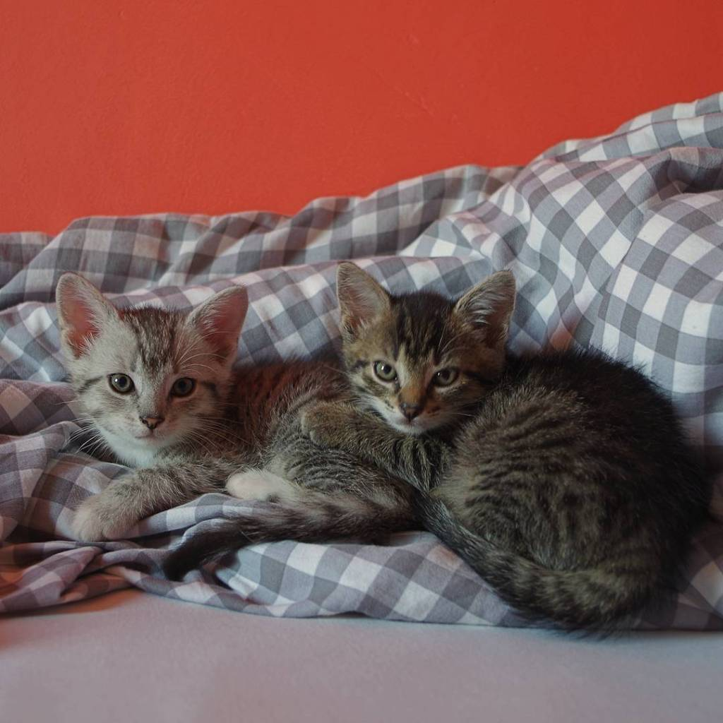 Do dugo mylelimy o adoptowaniu jednego kociaka Ale po przeczytaniuhellip