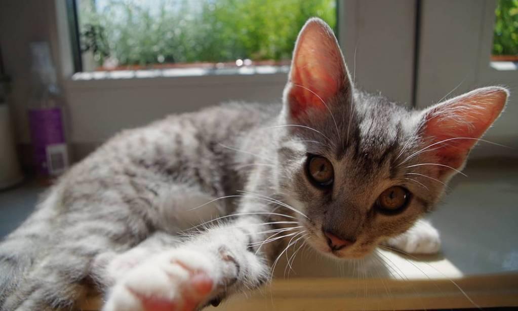 Te wiecce uszy catlife catlove inlove catsofinstagram catsofig kotypsoty sobotakotahellip