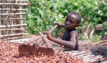 Droit des enfants/ Des ONG interpellent l'Etat ivoirien #travaildesenfants