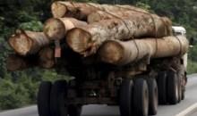 Dabakala/Trafic illégal de bois : La Sodefor s'oppose au ramassage du bois vendu par L'USI #Eauxetforêts