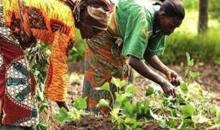 Côte d'Ivoire/Développement agricole à Man : Bleu Charlemagne apporte son soutien à une coopérative