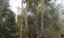 [Côte d'Ivoire/Vente anarchique de forêt dans la région du Cavally] Une bombe à retardement pour les populations