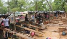[COTE D'IVOIRE/SARAKAKRO (S/P DE BROBO)] Attention, des orpailleurs clandestins y font la loi !