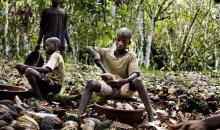 [Travail des enfants dans les champs] «Les Occidentaux ne comprendront jamais le rapport du jeune africain à la terre, car…» Par Fernand Dédeh