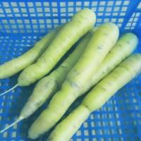 carotte jaune
