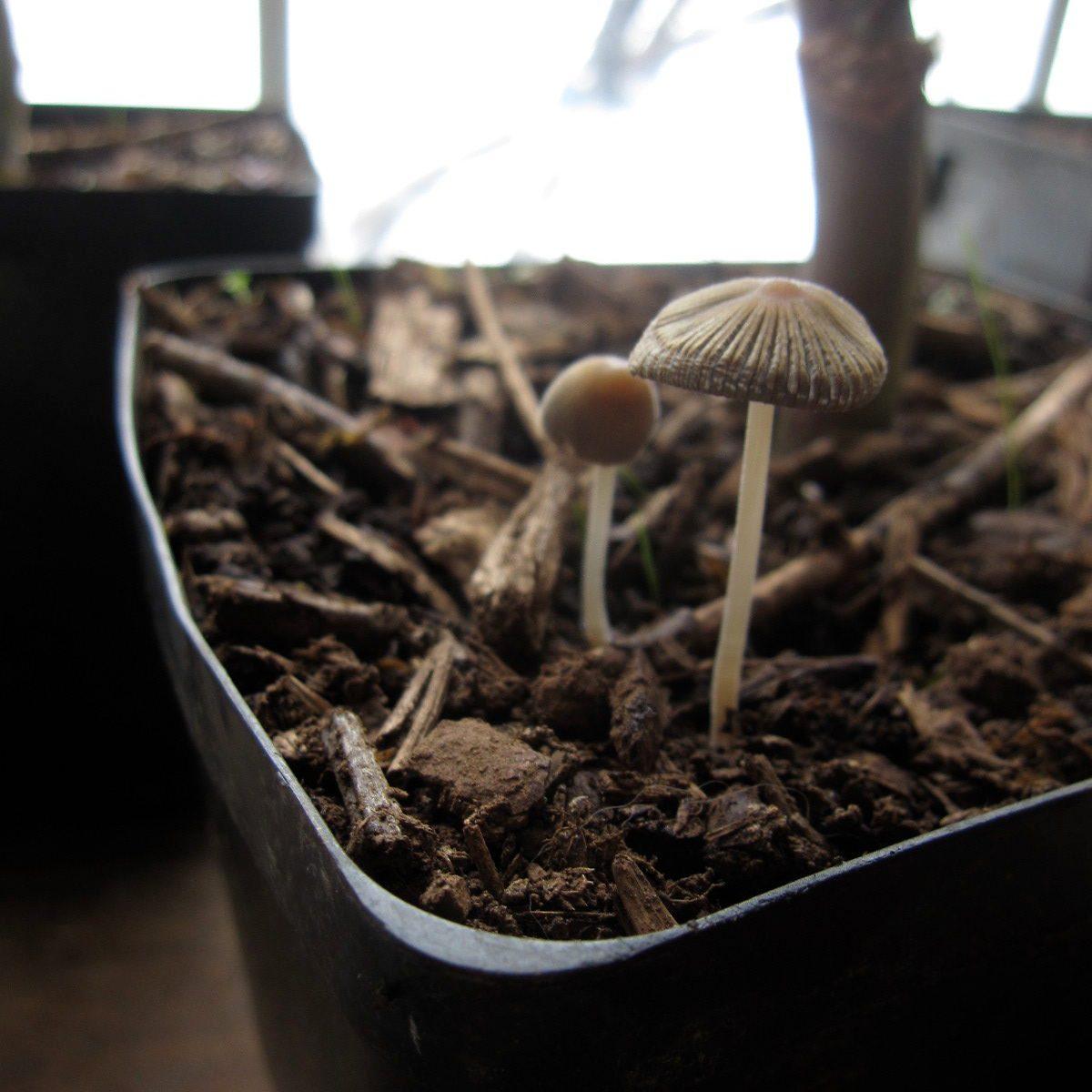 Quelle Plante En Pot Pour Terrasse le paillage des pots de fleurs, balconnières et jardinières