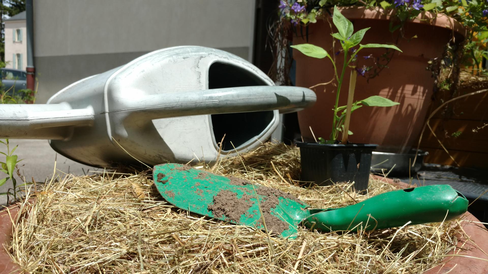 Plantation potager bio permaculture urbaine