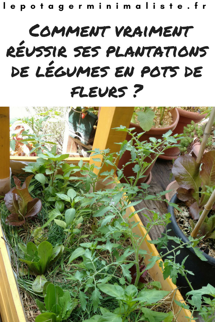 plantation-lasagnes-tomate-jardinière-arrosage-pinterest