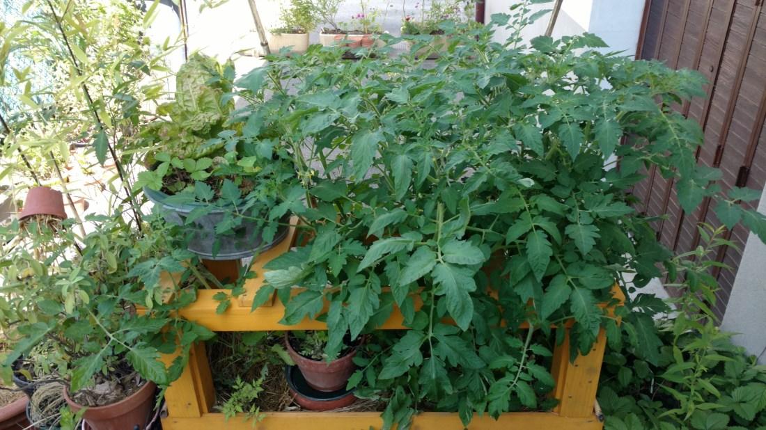culture-lasagne-jardiniere-bac-pot-fleurs