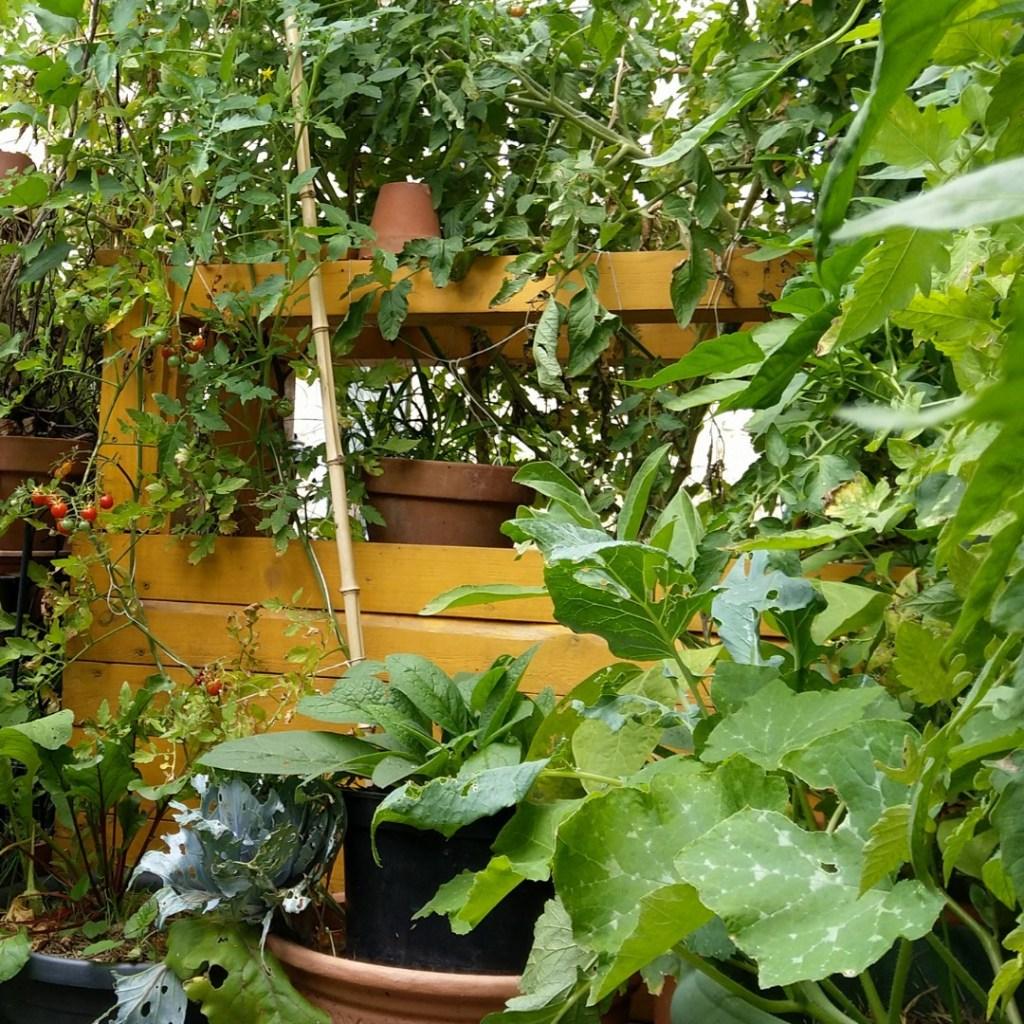 terrasse-balcon-potager-bio-vivant-carré