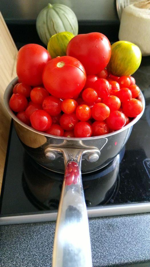 recolte-tomate-potager-balcon-terrasse