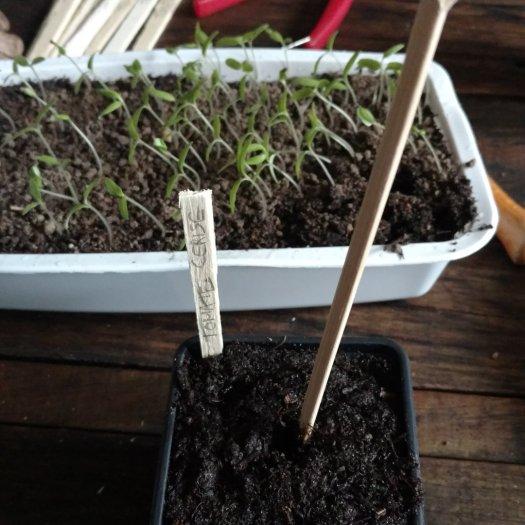 semis-filent-potager-urbain-permaculture