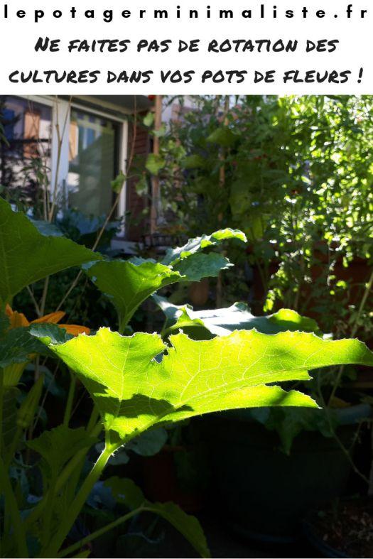 rotation-culture-potager-terrasse-balcon-pinterest