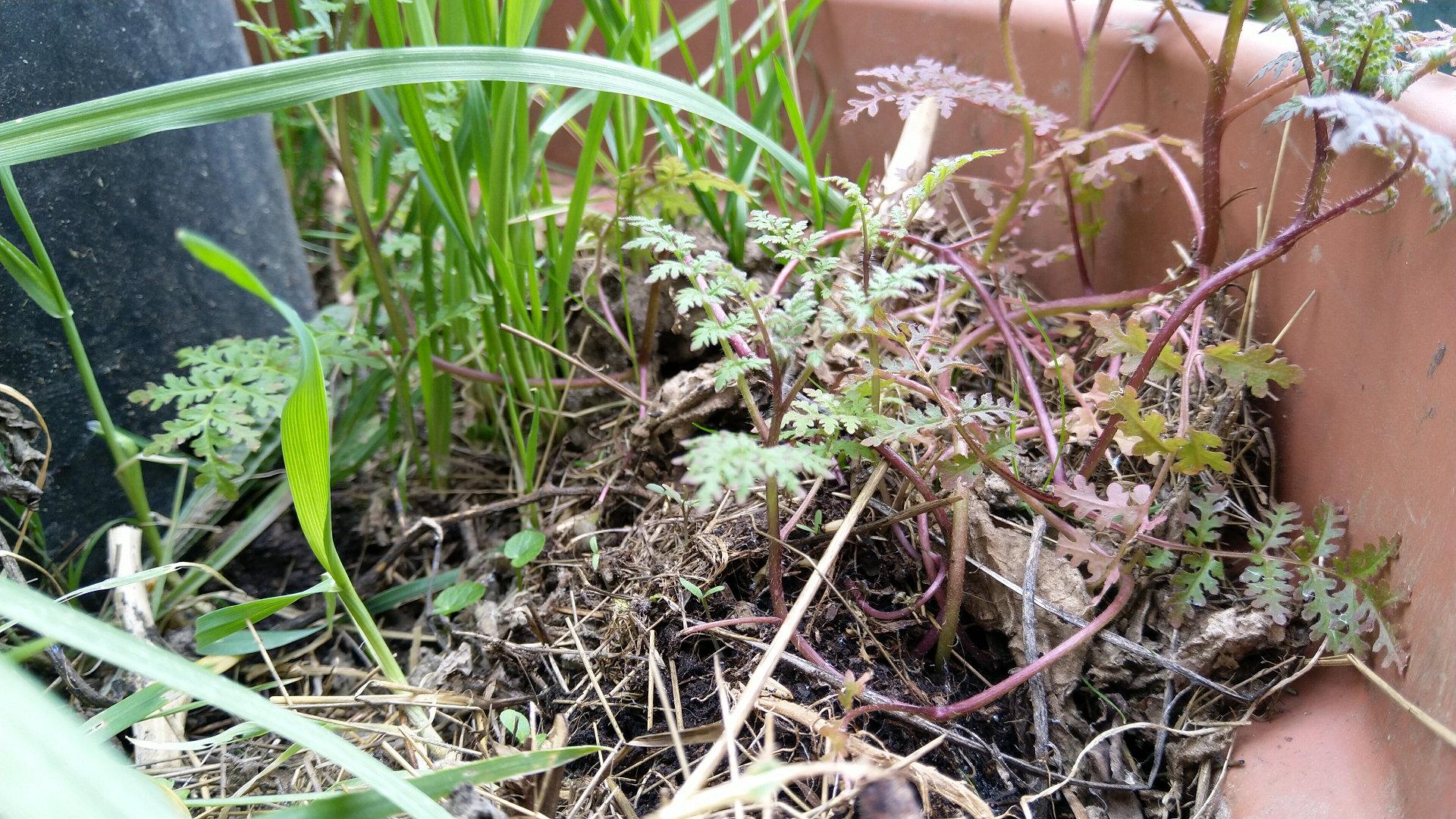 6-principes-maintenir-sol-vivant-pot-fleurs