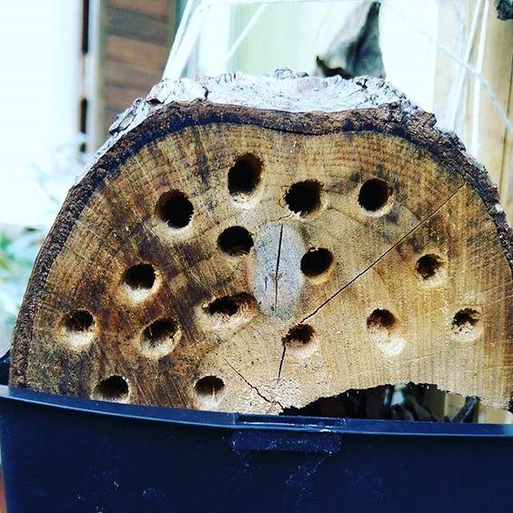 buche-abeille-solitaire-abri-jardin-urbain