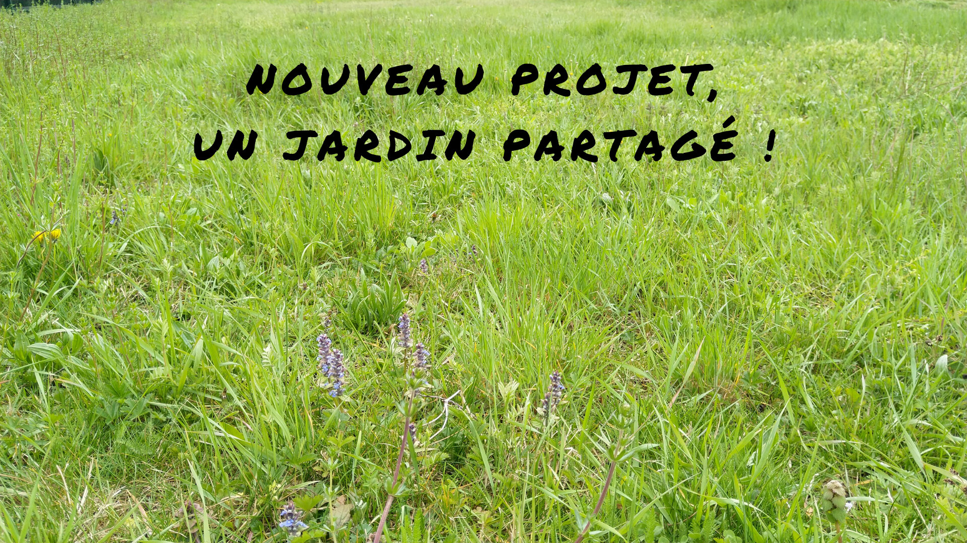 jardin-partagé-agriculture-permaculture-urbaine-projet