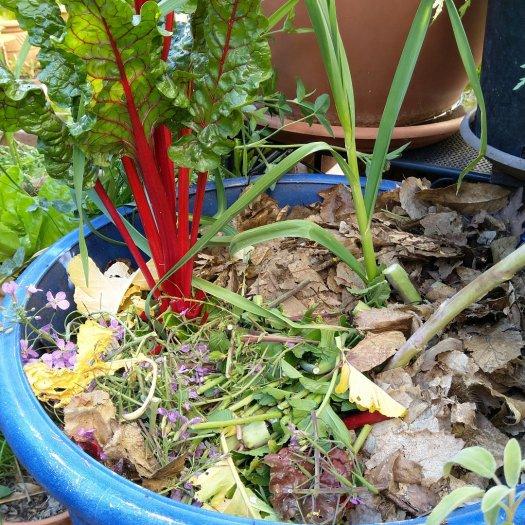 Permaculture urbaine - Le paillage en pot de fleurs pour fertiliser le sol et retenir l'eau.