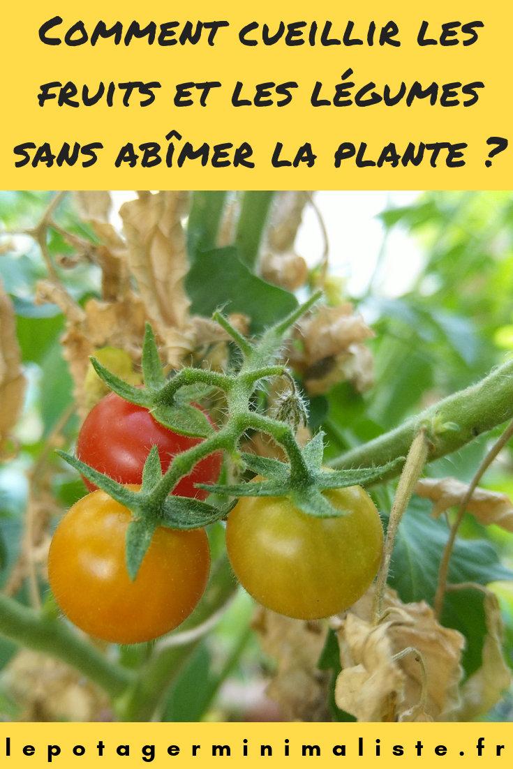 comment-bien-cueillir-tomate-permaculture-pinterest