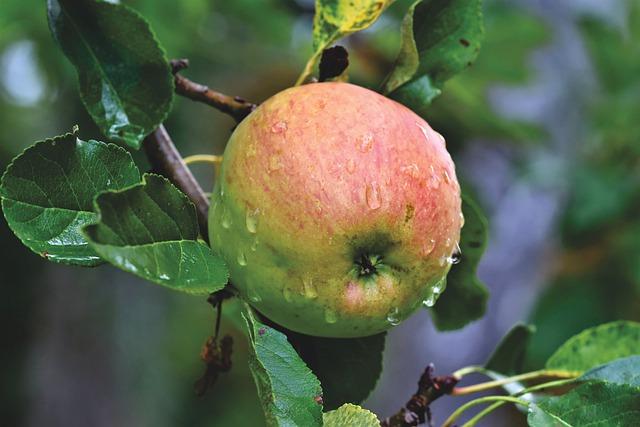 conserver les pommes