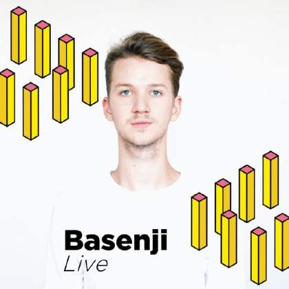 Basenji - TEMPLE