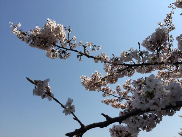 Photo Mar 30, 10 29 15 AM