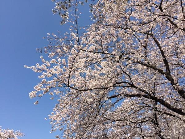 Photo Mar 31, 1 08 48 PM