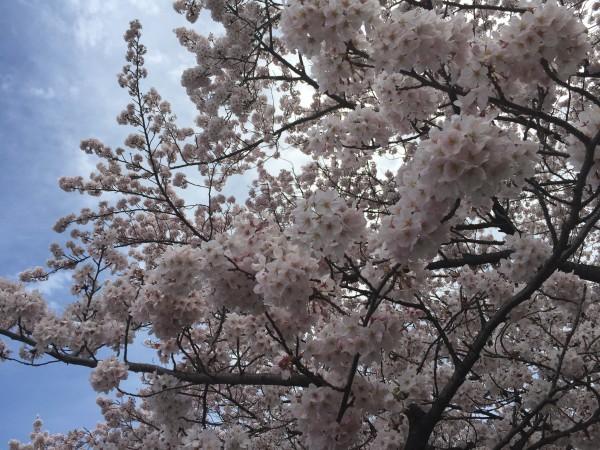 Photo Apr 04, 12 34 58 PM